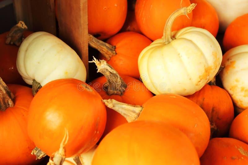Orange und weiße Kürbise lizenzfreies stockfoto