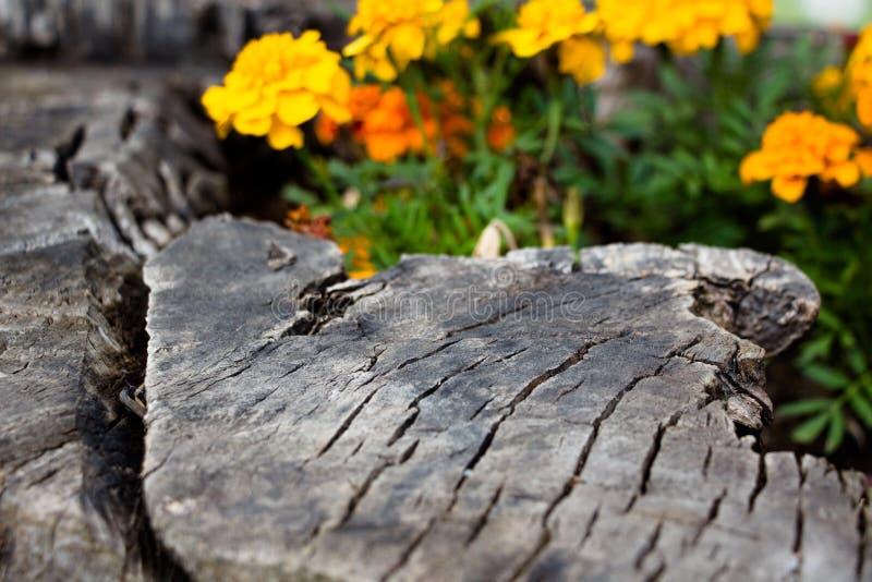 Orange växa för blommor i stubben fotografering för bildbyråer