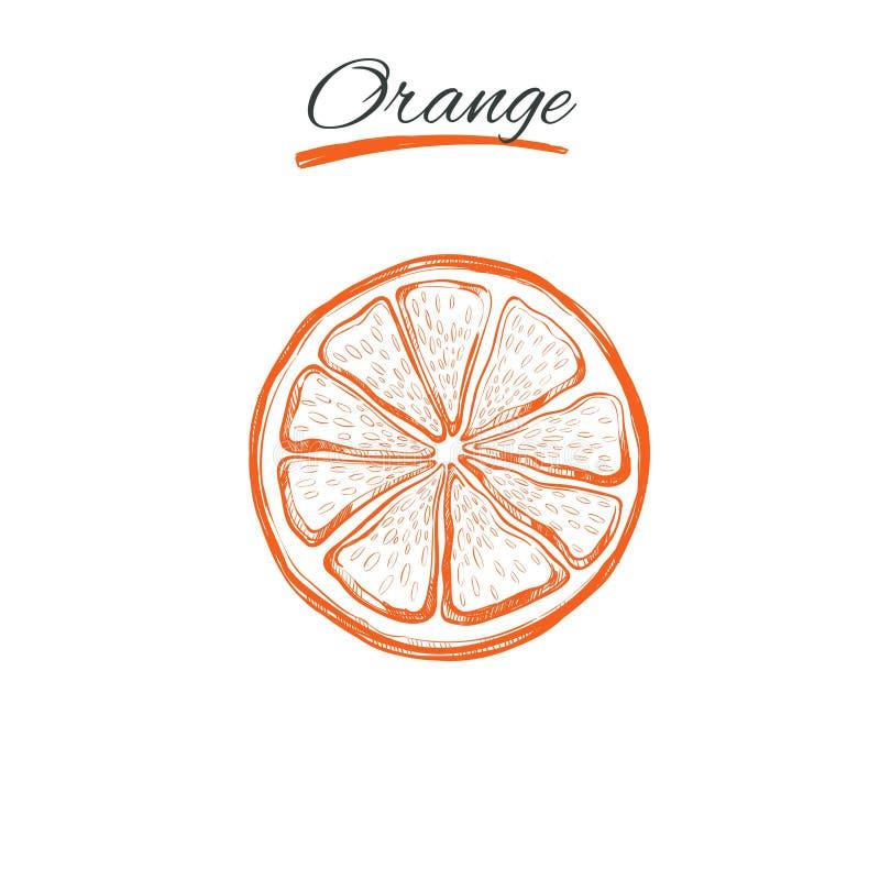 Orange Vecteur tiré par la main Herbes et fleurs naturelles Beauté et Ayurveda Produits de beauté organiques illustration libre de droits