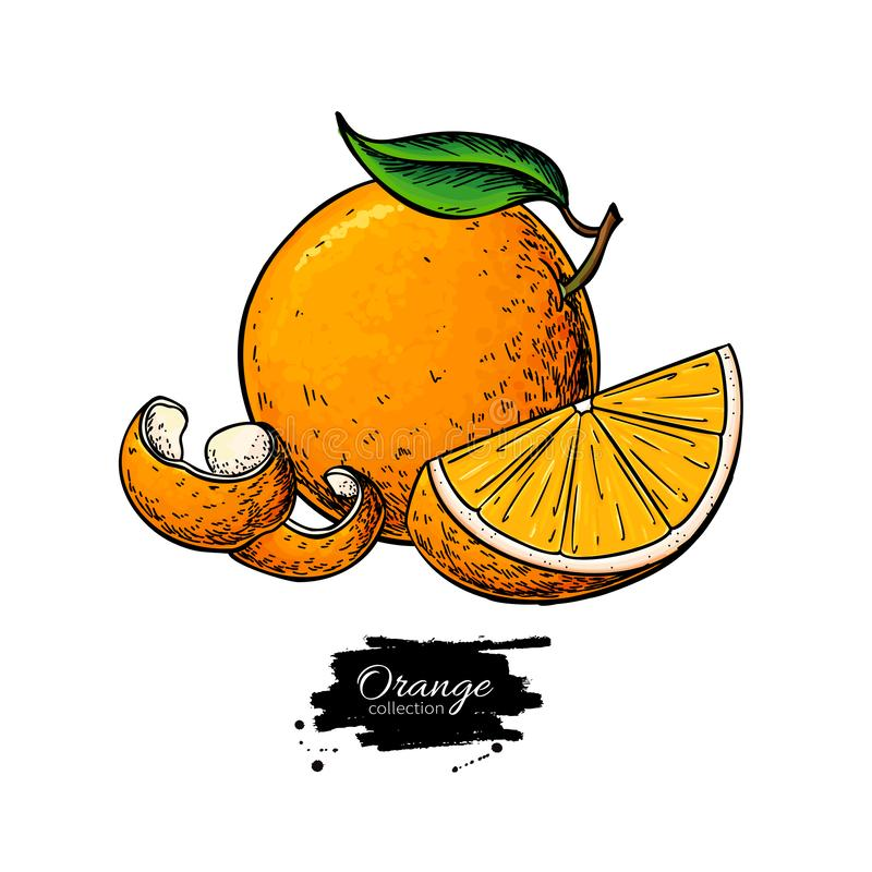Orange vector drawing. Summer fruit color illustration. Isolated hand drawn whole orange, slice and peel. stock illustration