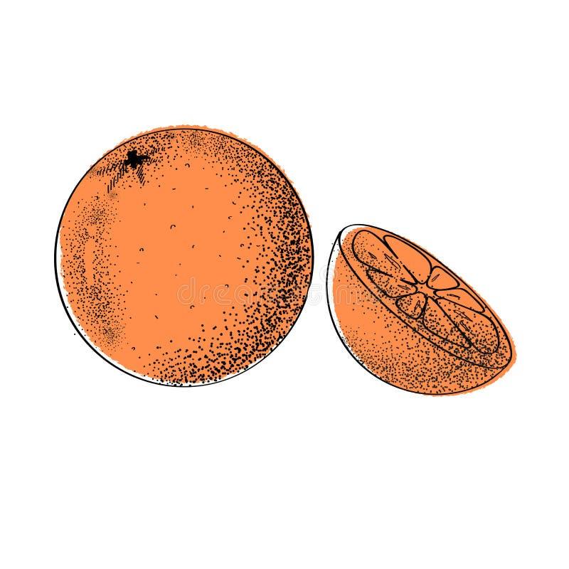 Orange. Vector illustration. Hand drawn fruits collection. stock photo