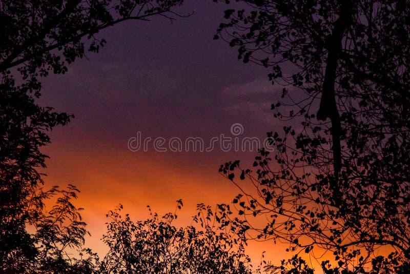 Orange/violet stock image