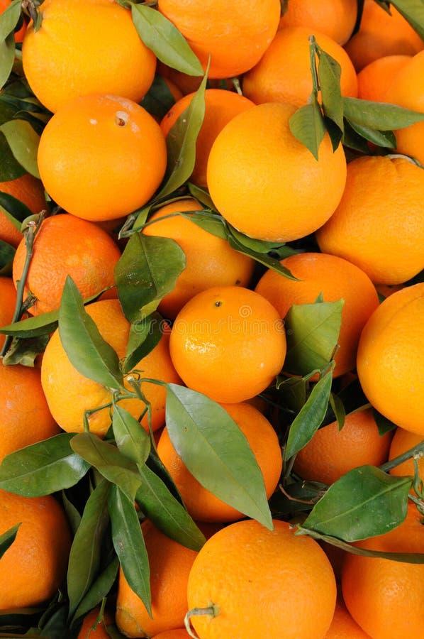 Orange von Sizilien lizenzfreies stockfoto