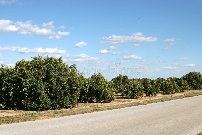 Orange Waldungen in Florida lizenzfreie stockfotografie