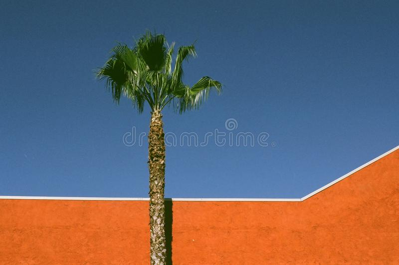 Download Orange Wall and Palm stock image. Image of blue, orange - 12662819