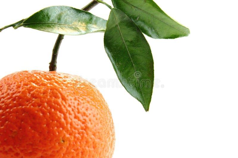 Orange and white stock image