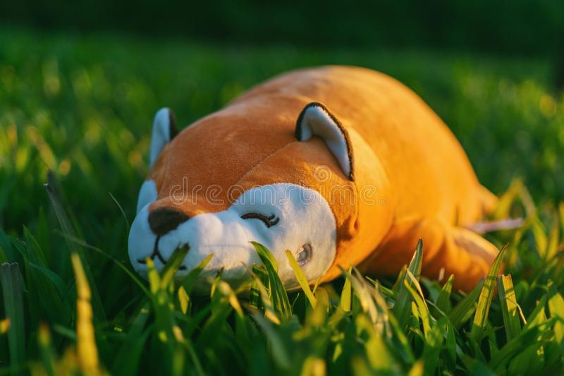 Orange and White Animal Plush Toy on Green Grasses in Focus Photography stock photos