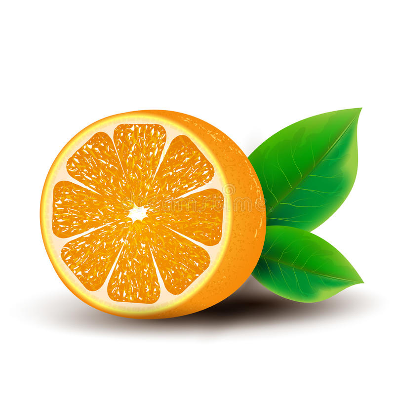 Download Orange stock vector. Illustration of half, juicy, summer - 39505697