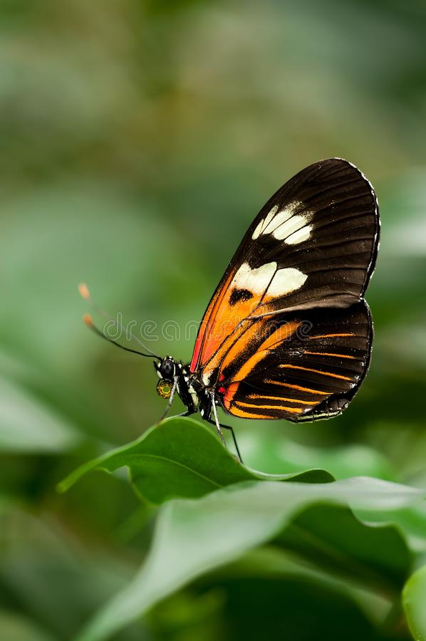 Orange White And Black Butterfly On Green Leaf Free Public Domain Cc0 Image