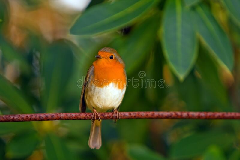 Orange White Brown Bird On Top Of Red Branch Free Public Domain Cc0 Image
