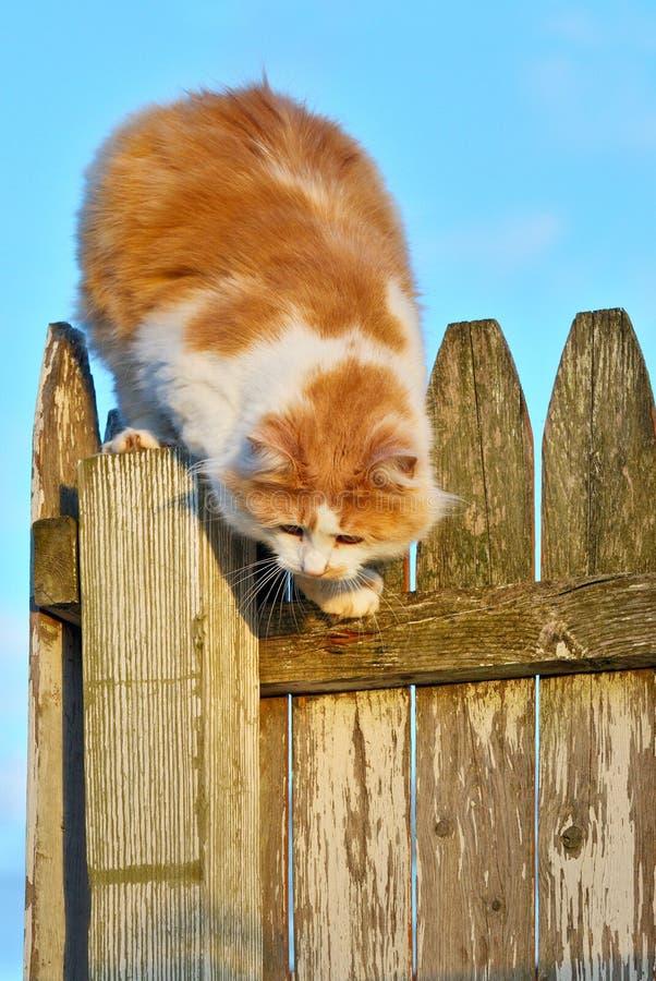 Orange and White Cat stock images