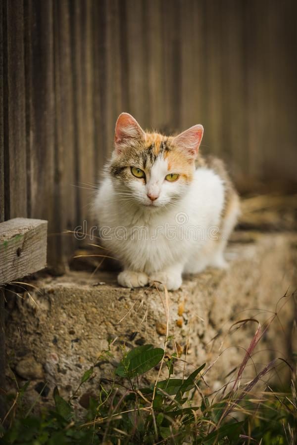 Orange and white cat sitting on low wall stock photography