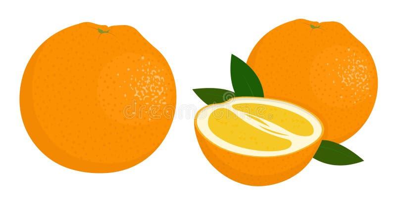 Orange whole and half of orange. Citrus fruit. Raster illustration of oranges on white background. Orange whole and half of orange. Raster illustration of vector illustration