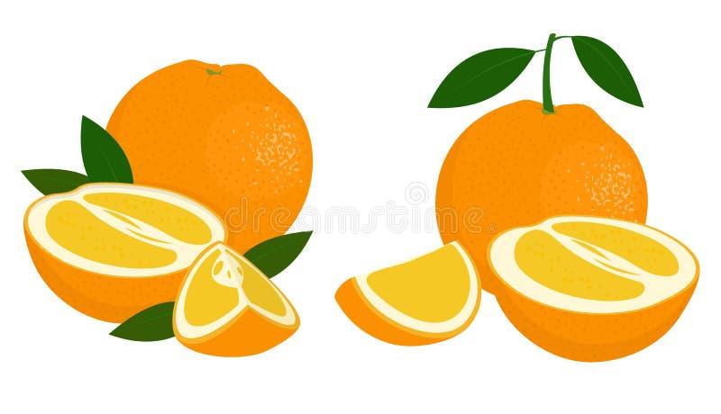 Orange whole, half and slice of orange with leaves on white background. Citrus fruit. Vector illustration of oranges on. Orange whole, half and slice of orange vector illustration