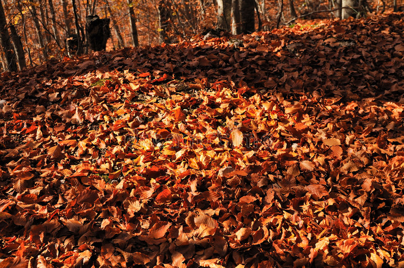 Download Orange Wood stock photo. Image of autumn, abruzzo, environment - 7347982