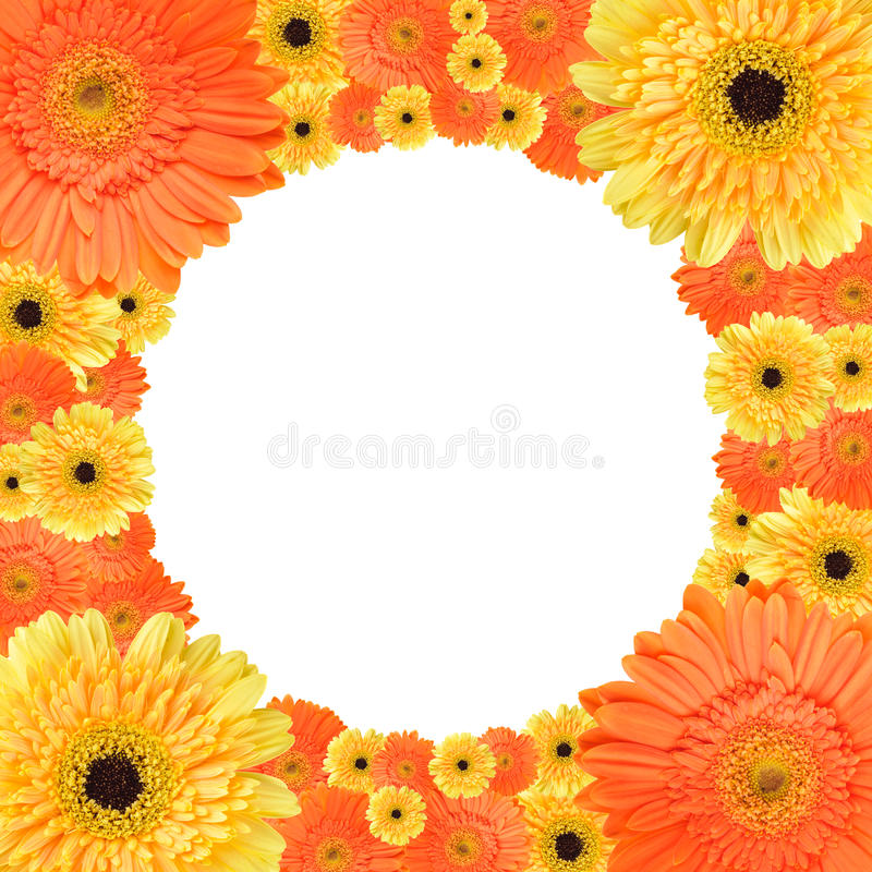 Download Orange And Yellow Daisy Circular Frame Royalty Free Stock Images - Image: 20876719