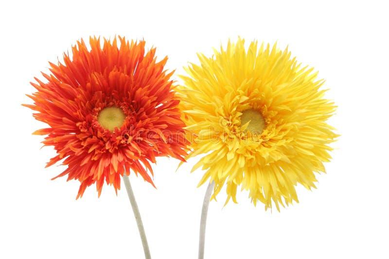 orange yellow för tusenskönor royaltyfria foton