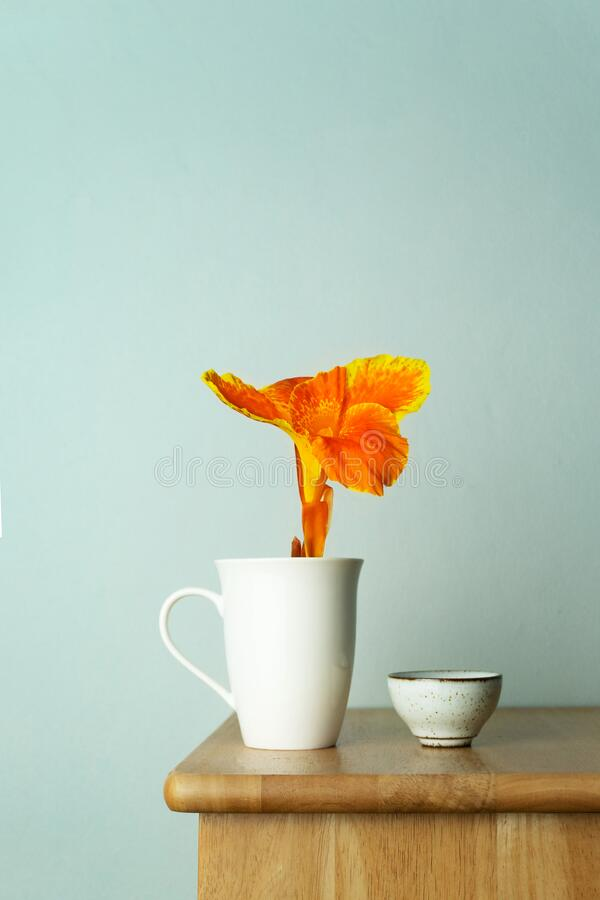 Free Orange Yellow Flower In White Ceramic Mug With Tea Cup On Wood Table With Blue Vintage Wall Interior Background Royalty Free Stock Photo - 182534995