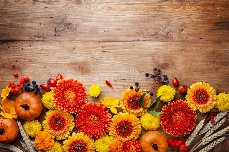 Orange and yellow gerbera flowers, decorative pumpkins, wheat ears on wooden rustic table. Autumn nature or Thanksgiving day. Orange and yellow gerbera flowers stock photo