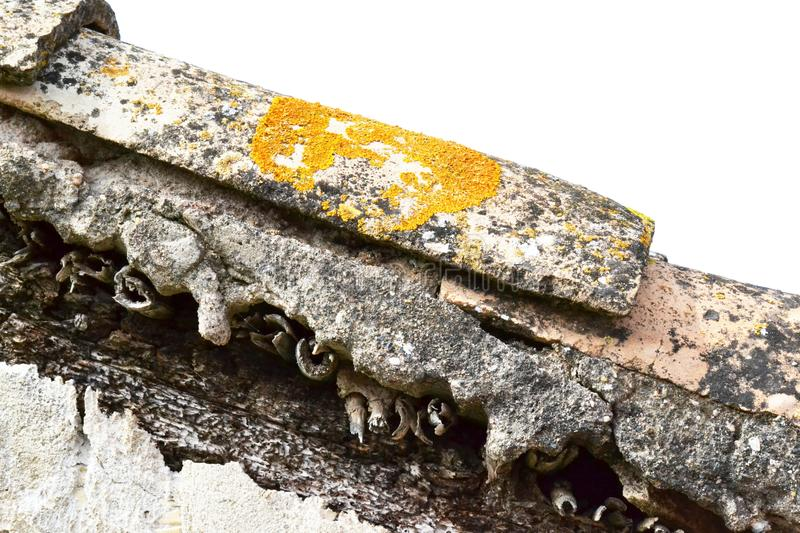 Old roof, tile with lichen. Orange and yellow lichen on old roof tiles. Big lichen on tile royalty free stock photos