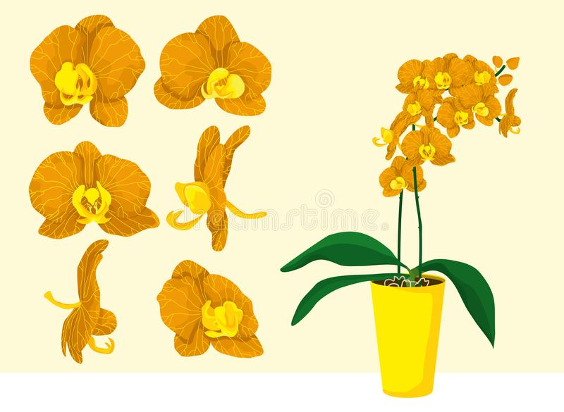 Orange and yellow orchid plant in pot. Interior design element. Set of different single flowers. Colorful petals. Isolated vectors vector illustration