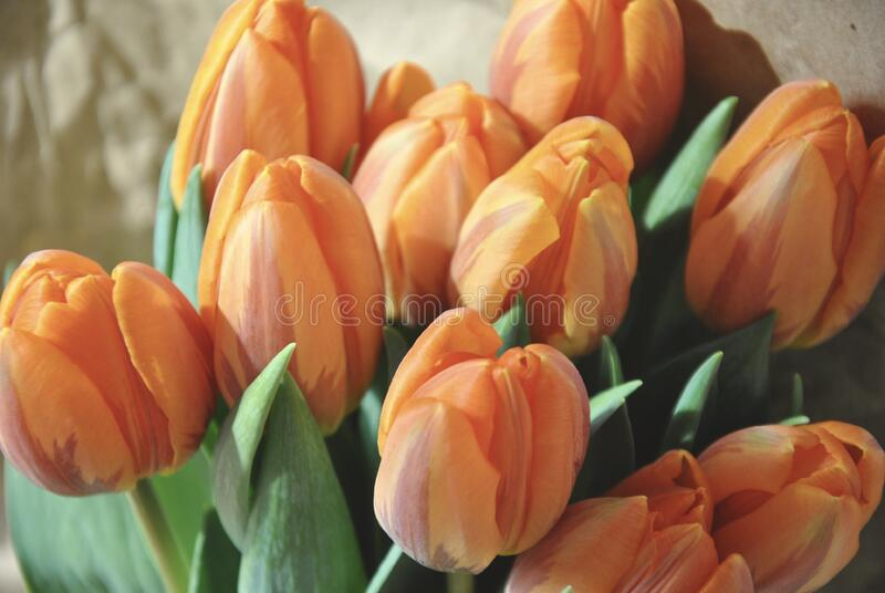Orange and Yellow Petaled Flower Bouquet stock images