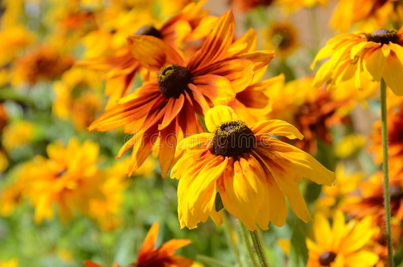 Orange yellow and red flowers stock photos