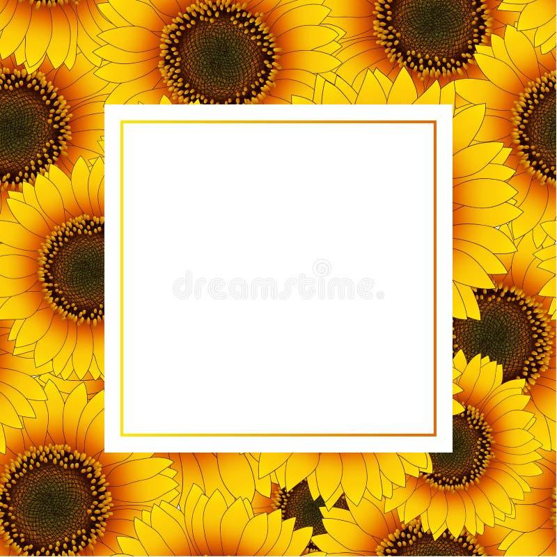 Orange Yellow Sunflower Banner Card Border isolated on White Background. Vector Illustration stock illustration