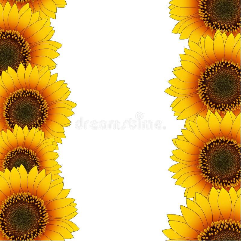 Orange Yellow Sunflower Border isolated on White Background. Vector Illustration stock illustration