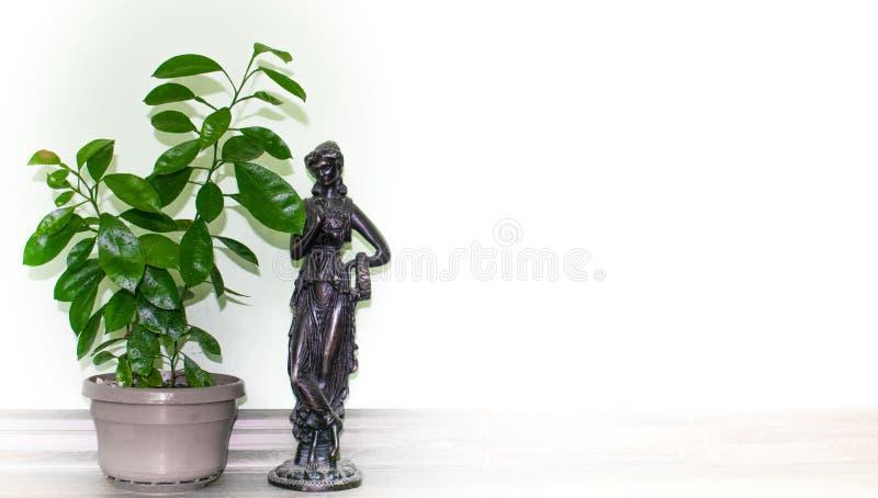 Orange Zwerg gewachsen in den Töpfen im Haus Statue des Knochens Raum für Text im weißen Hintergrund lizenzfreie stockfotos