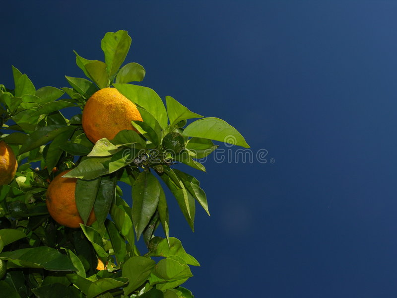 Orange2 foto de archivo libre de regalías