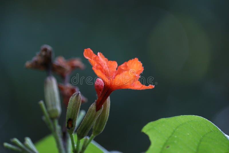 Orangefarbene Lilienblumen stockbild