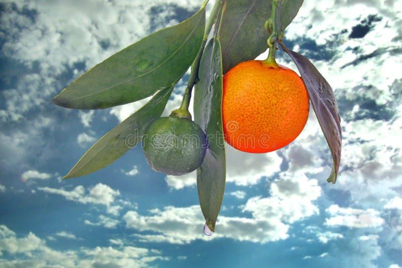 Download Orangen stockbild. Bild von himmel, korinthen, nahrung - 26354543