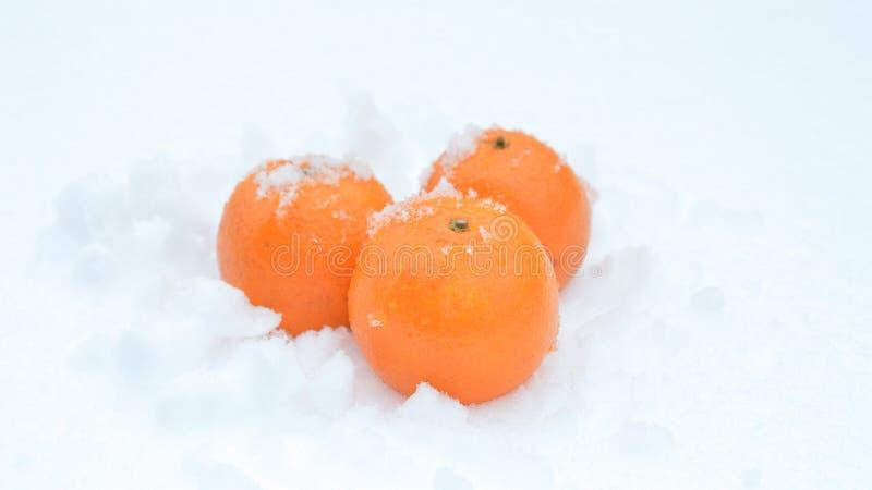 Orangen auf Schnee lizenzfreie stockfotos