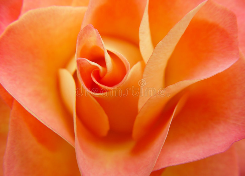 Orangen Steg Arkivbild