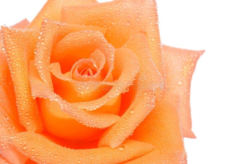 Download Orangen steg fotografering för bildbyråer. Bild av blomsterhandlare - 19794483