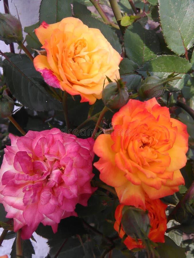 orangen steg tre royaltyfria foton