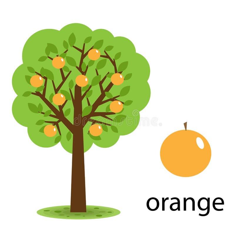 Orangenbaum stock abbildung