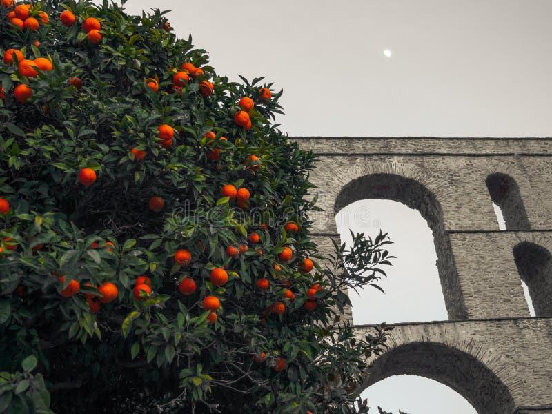 Orangenbaum vor dem alten römischen Aquädukt - Kavala, Griechenland lizenzfreie stockfotos