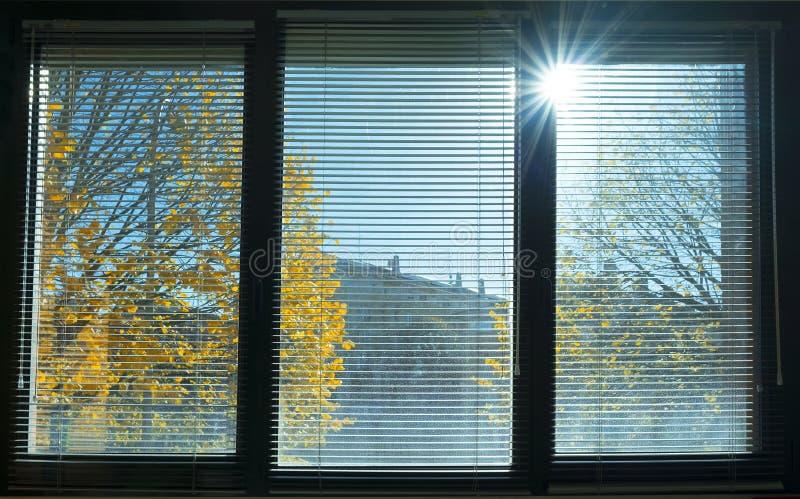 Orangenblätter vom Fenster lizenzfreie stockfotos