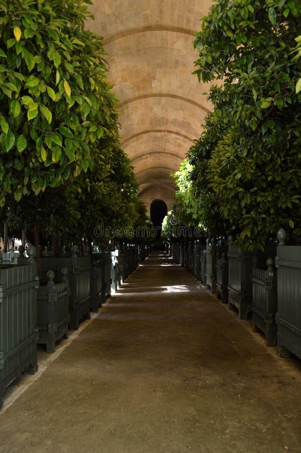 Orangerie à Versailles photo stock