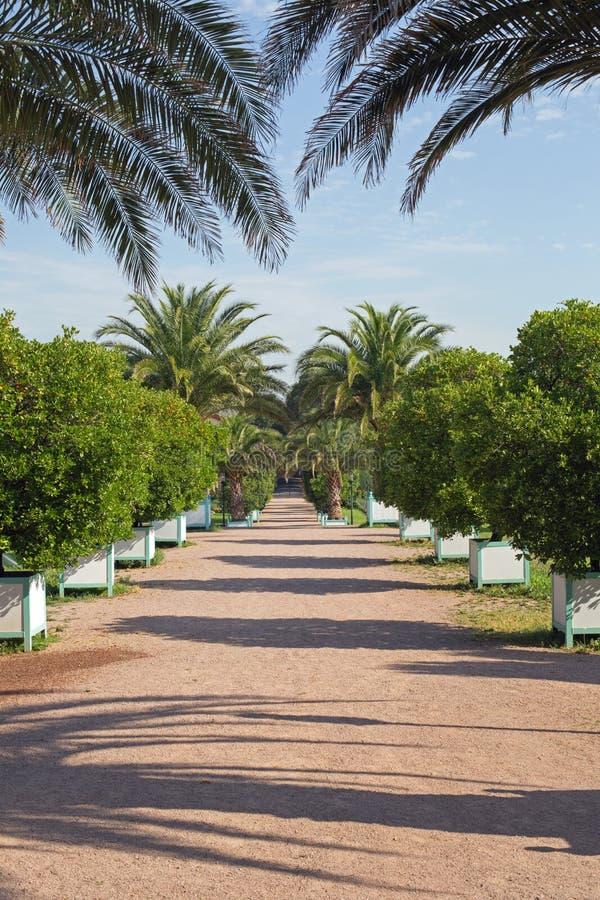 Download Orangerie Garden In Darmstadt Hesse, Germany Stock Photo - Image: 83711604