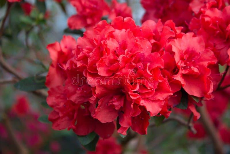 Orangery february flowers stock image