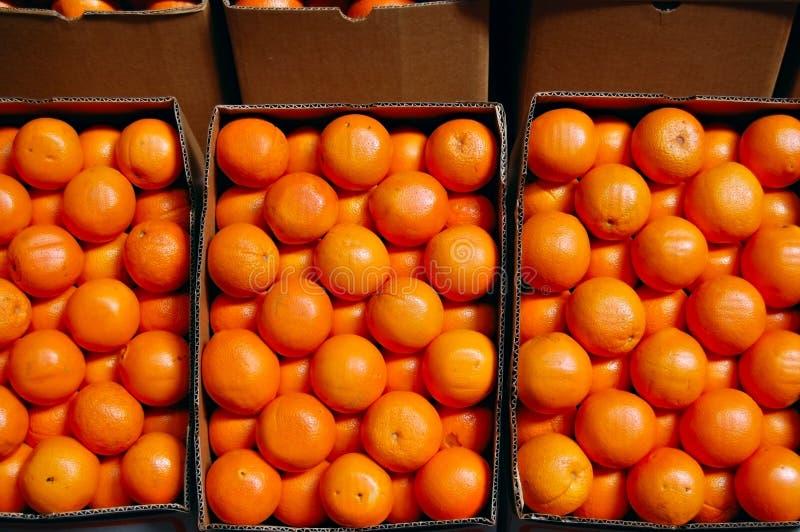 Oranges stock images