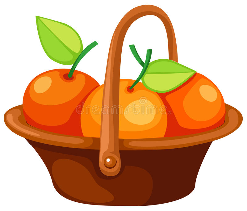 Oranges in basket. Illustration of isolated oranges in basket on white background vector illustration