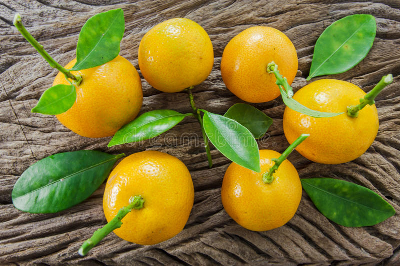 Oranges (Citrus Japonica Thunb) on a wooden royalty free stock image