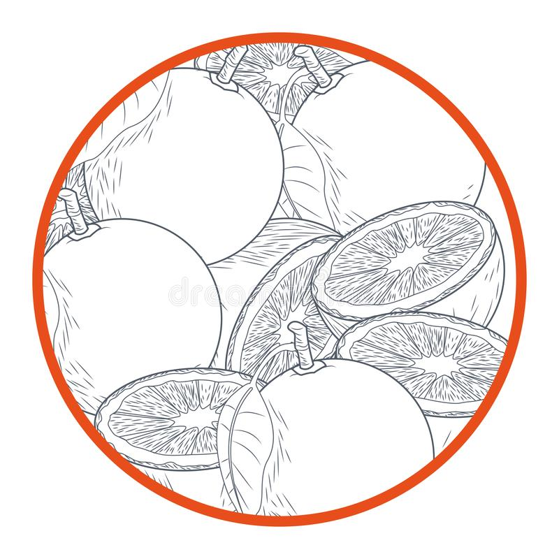 Oranges cut half round icon stock illustration