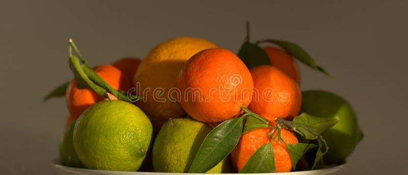 Oranges et citrons fraîchement sélectionnés photo stock