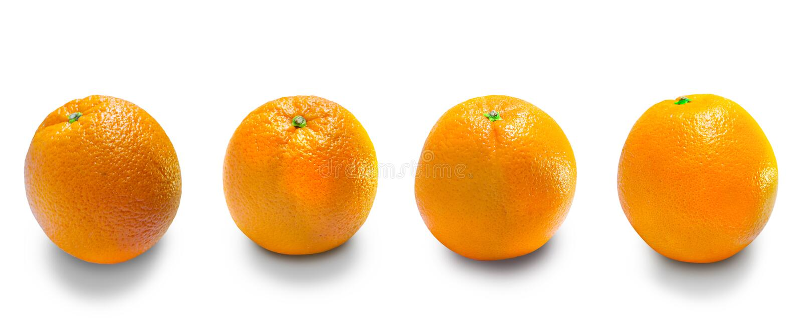 Oranges is the fruit of the citrus stock photo