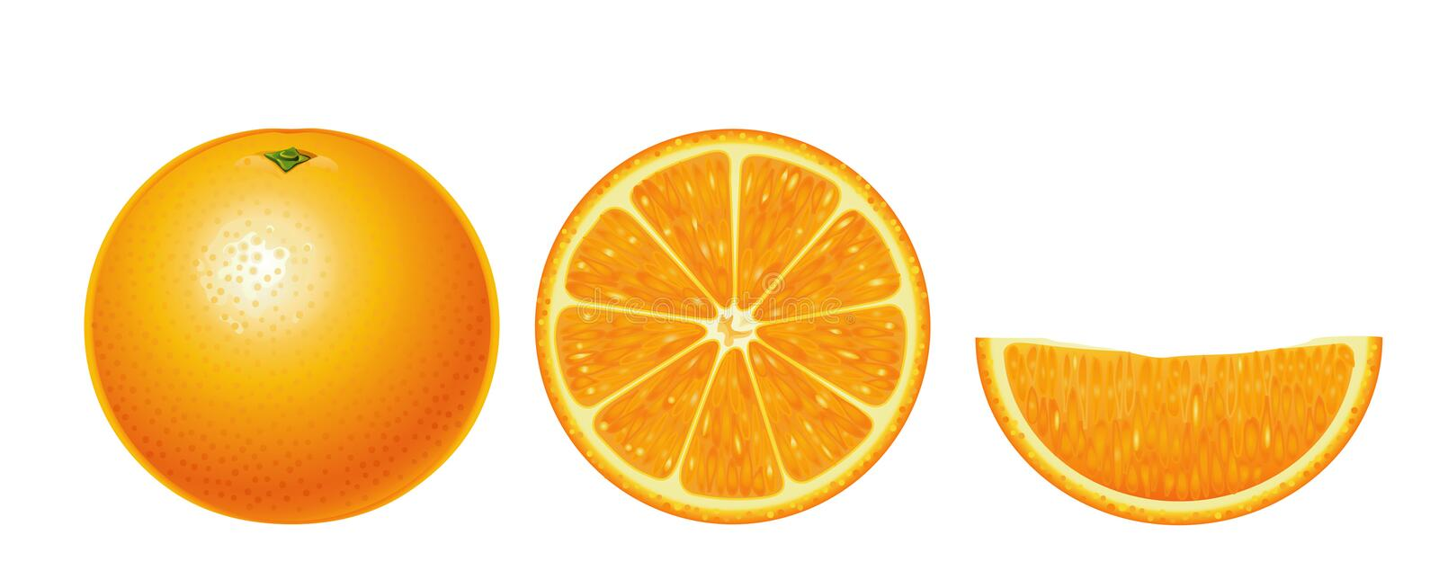 Oranges isolated (complex). Oranges isolated (complex version, other fruits & berries are in my gallery vector illustration